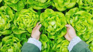 a new way to look at eating greens